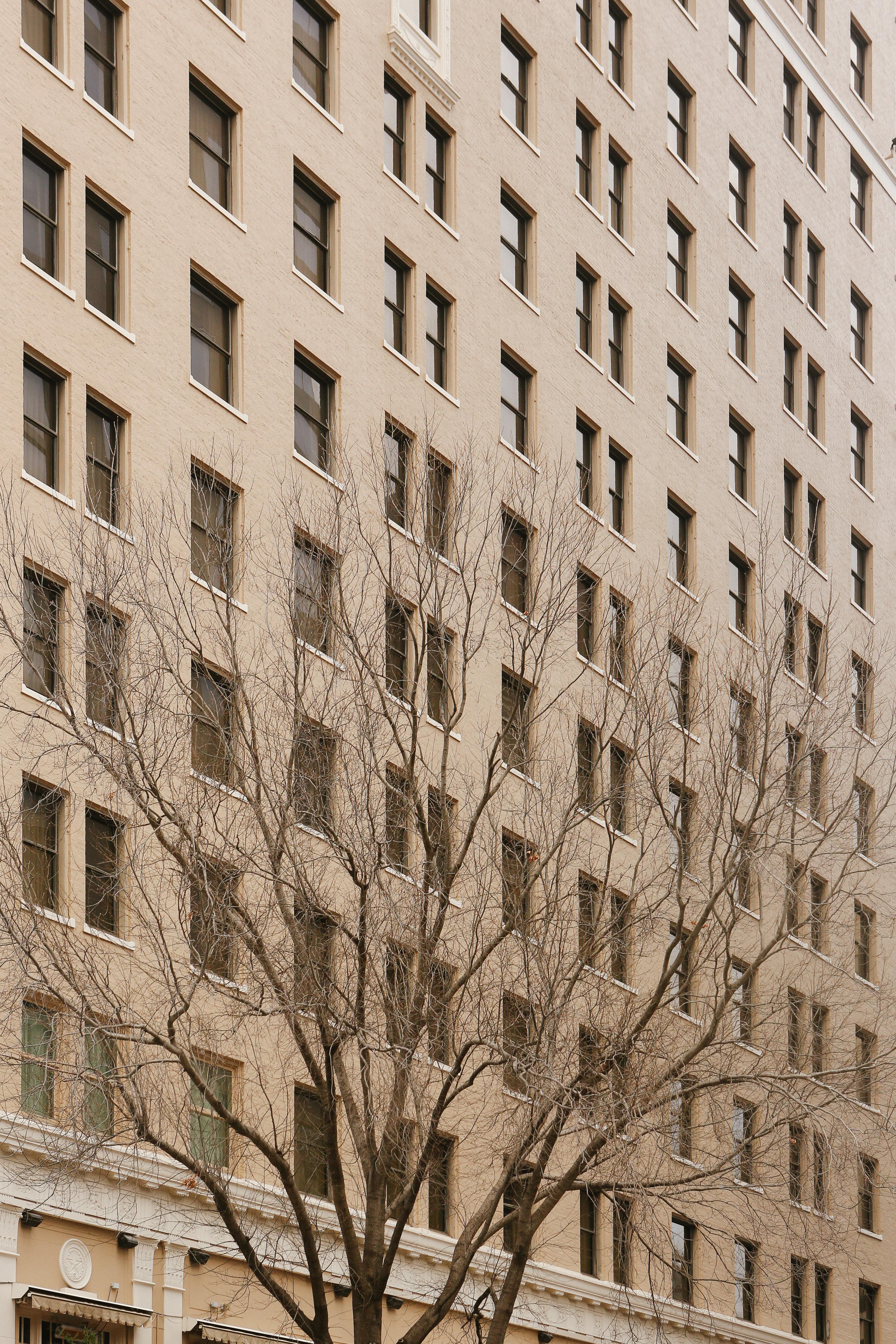 Austin Texas Building Facade With Tree