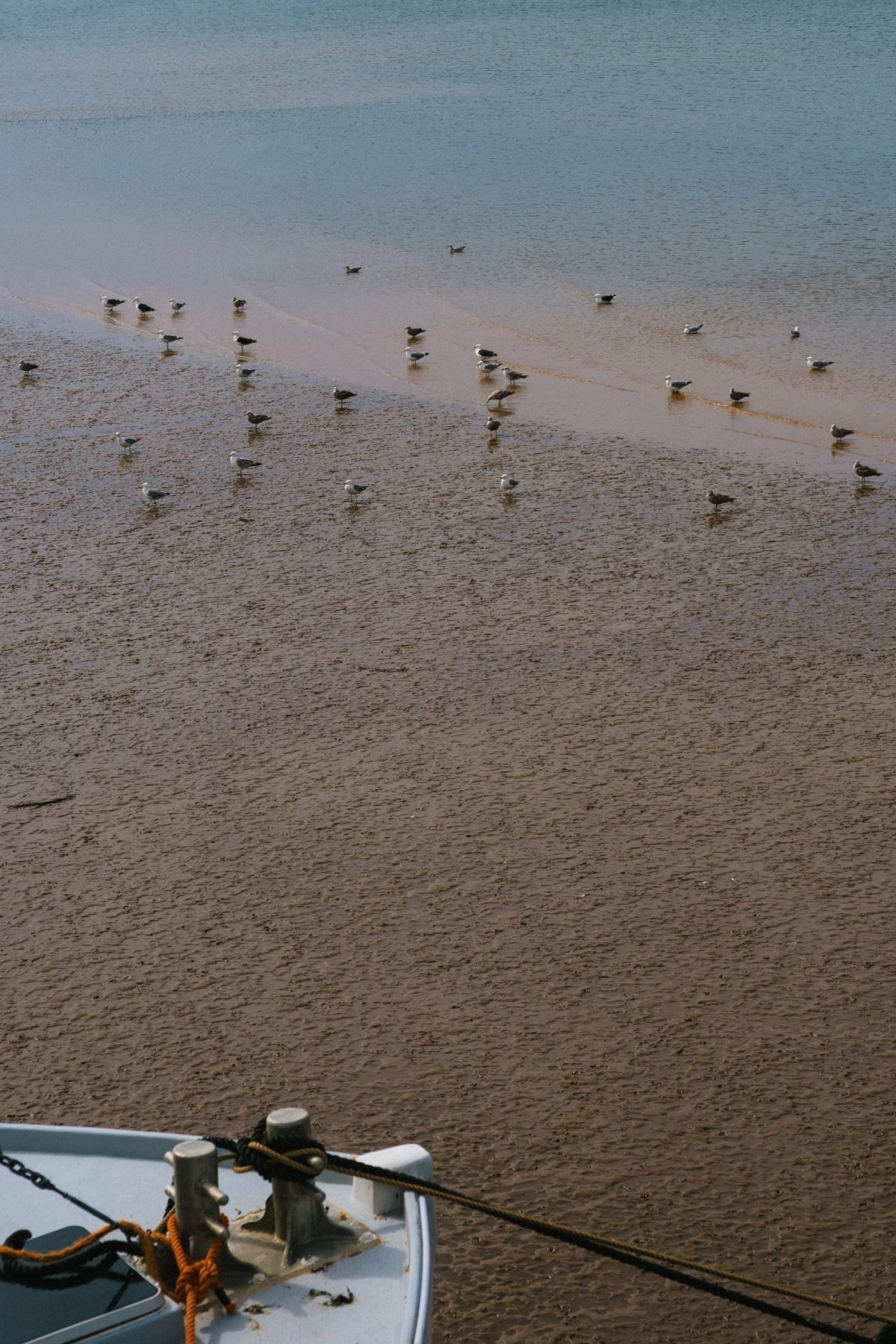 Birds during Low Tide