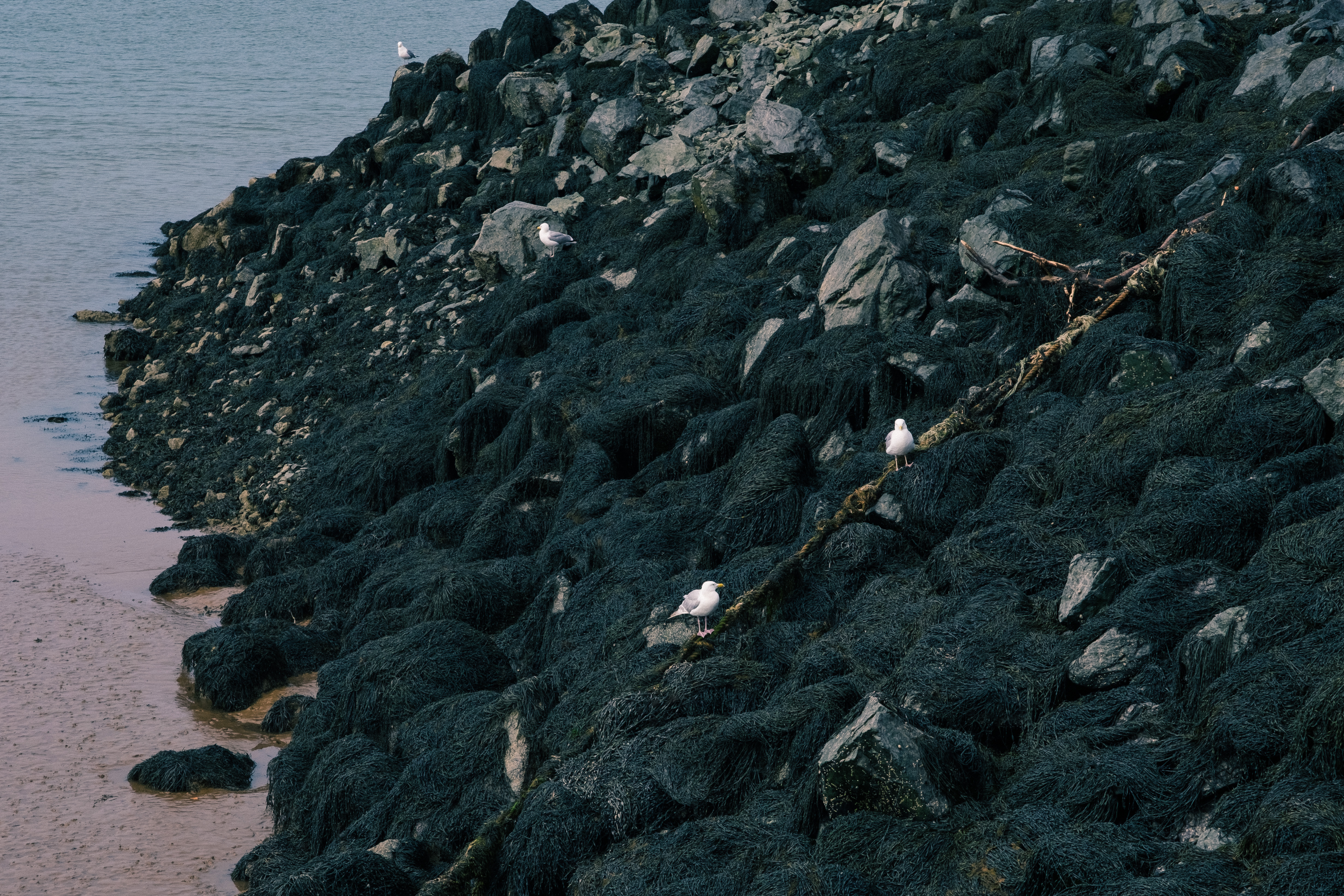 Birds on Rocks at Pier