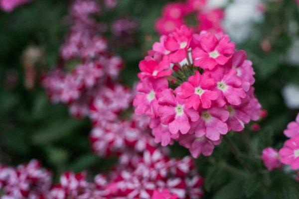 Bright Flower in Saint John