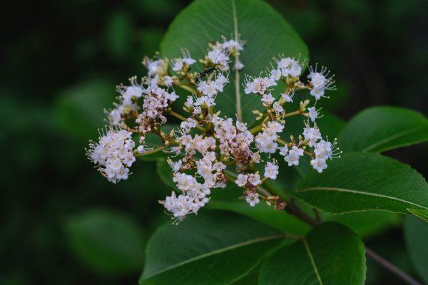 Flower Close Up Bug