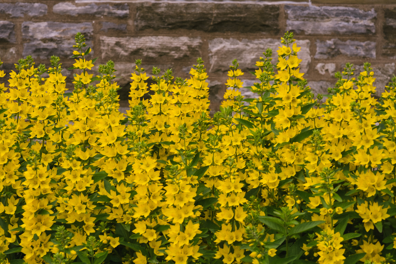 Flowers in Front of Church Saint John