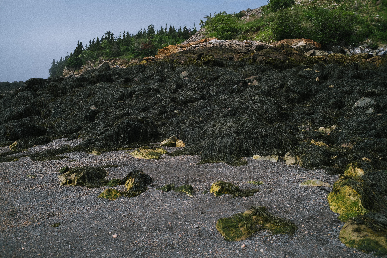 Seaweed Covering Rocks at Black Beach