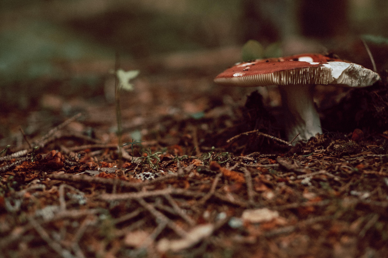 Picked Mushroom Wide